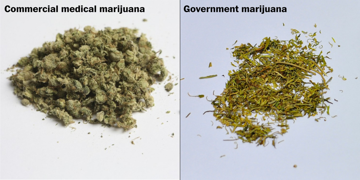 Commercial vs. Government Cannabis